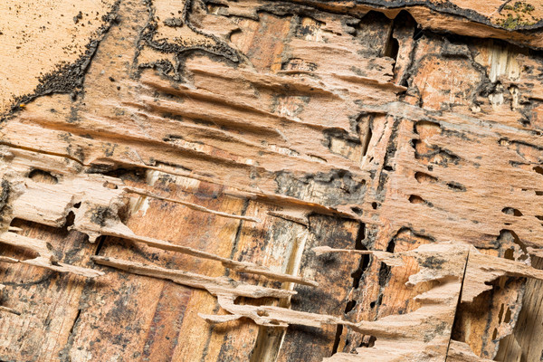 Wood eaten by termites Stock photo © smuay