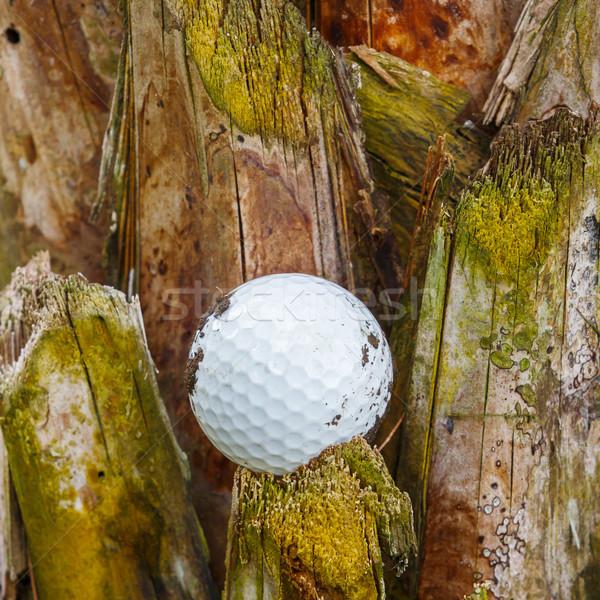 ゴルフボール 汚い ヤシの木 ツリー ストックフォト © smuay