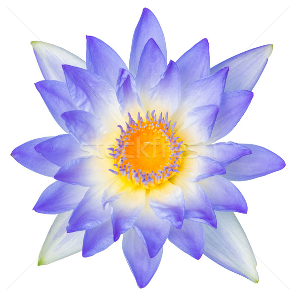 Water lily or lotus flower  Stock photo © smuay