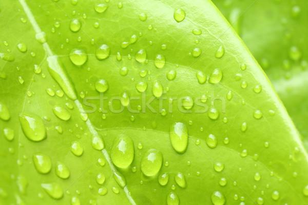Levél víz cseppecske zöld levél frissesség érzés Stock fotó © smuay