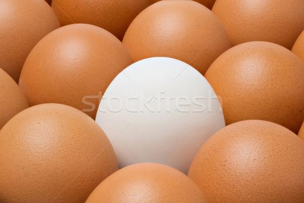 Duck egg among chicken eggs Stock photo © smuay