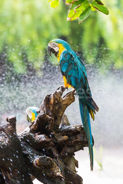 Papuga ogród kolorowy kwiat ogród ptaków Zdjęcia stock © smuay