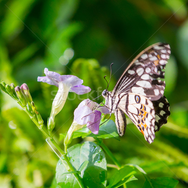 Vlinder nectar bloemen openbare park Thailand Stockfoto © smuay