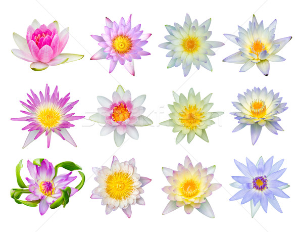 Water lily or lotus flower set 12-2 Stock photo © smuay