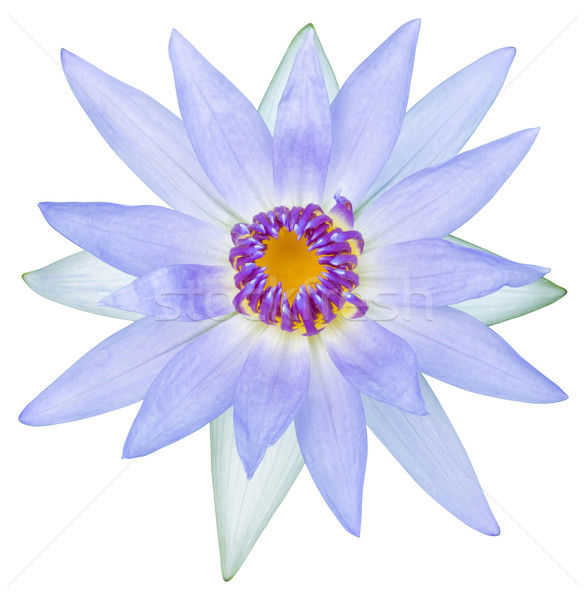 Víz liliom lótuszvirág közelkép fény lila Stock fotó © smuay