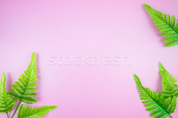Tropical Jungle branches leaves Monstera on pink pastel color ba Stock photo © snowing
