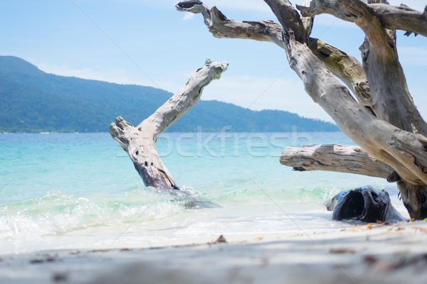 Long beach sea with timber and blue sky. Stock photo © snowing