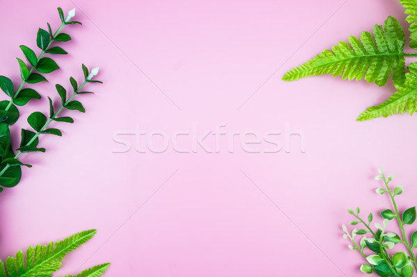 Tropische jungle bladeren roze pastel Stockfoto © snowing
