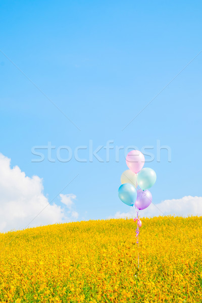 Colorful balloon over yellow flower fields with blue sky backgro Stock photo © snowing