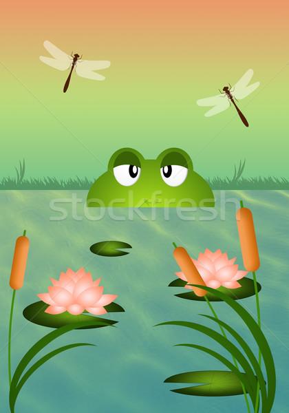 カエル 池 実例 水 自然 葉 ストックフォト © sognolucido