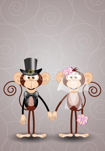 A couple of monkeys spouses Stock photo © sognolucido