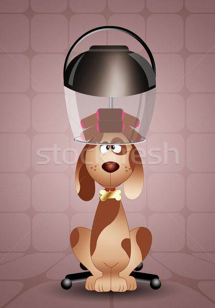 Dog grooming with hairdresser helmet  Stock photo © sognolucido