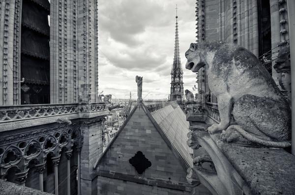 表示 ノートルダム大聖堂 パリ 大聖堂 市 ストックフォト © sognolucido