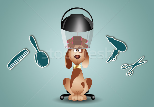 Dog grooming with haidresser tools Stock photo © sognolucido