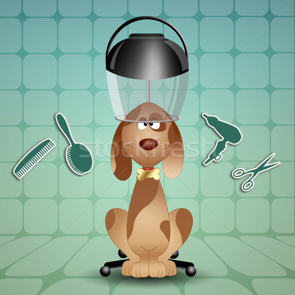 Grooming dogs Stock photo © sognolucido