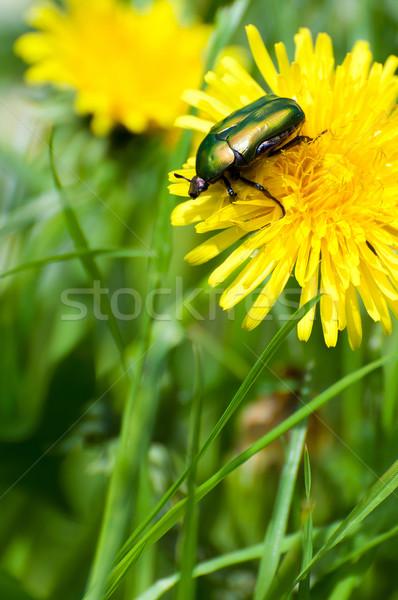 Groene kever natuur gele bloem natuurlijke bloemen Stockfoto © sognolucido