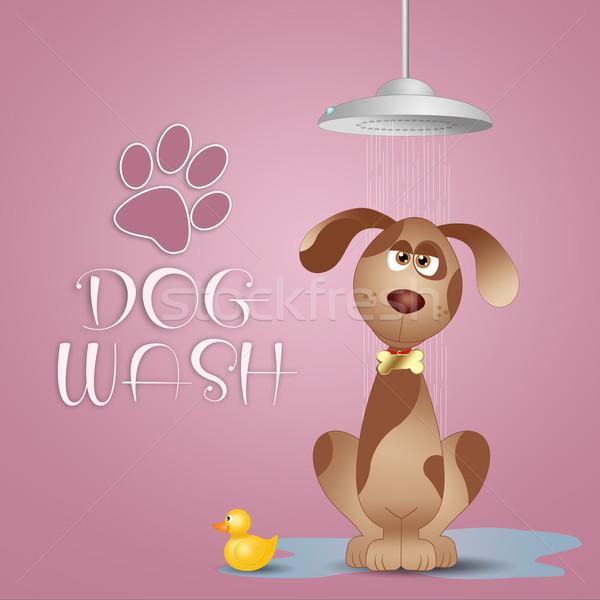 Stock photo: Dog grooming