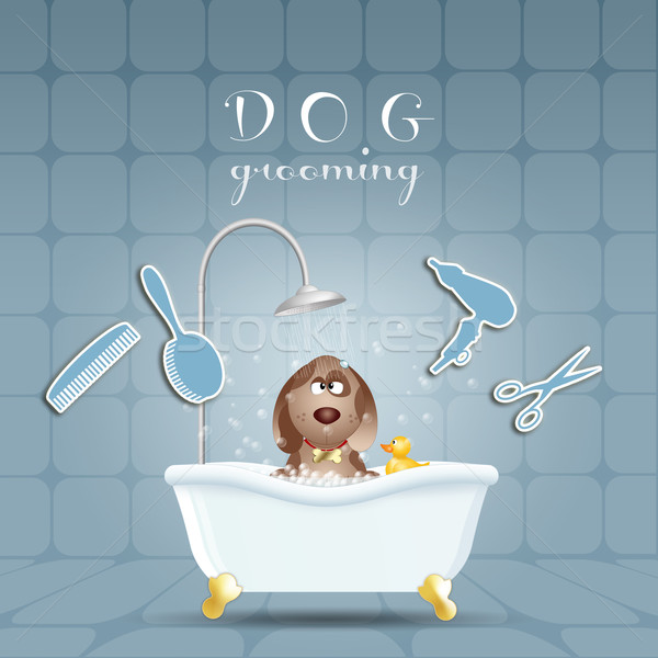 Dog in bath for grooming Stock photo © sognolucido