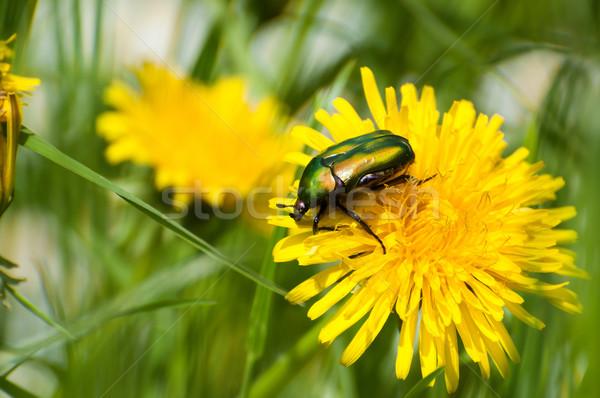 Bogár természet zöld sárga virág természetes virágok Stock fotó © sognolucido