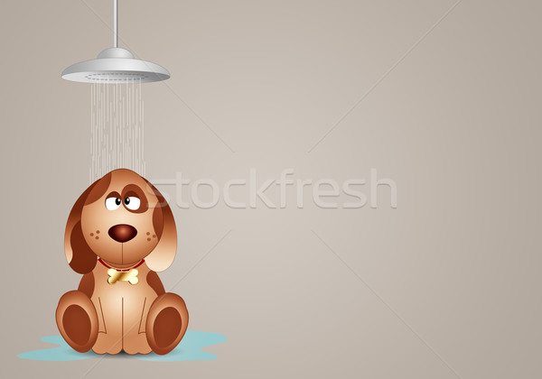 Funny dog under the shower  Stock photo © sognolucido