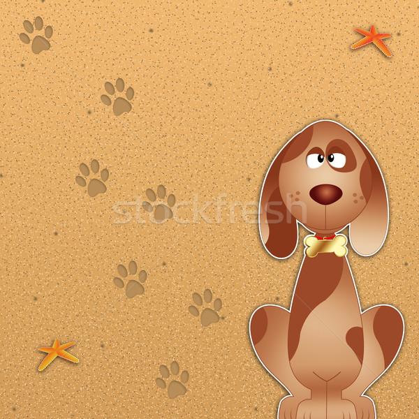 Dog beach Stock photo © sognolucido