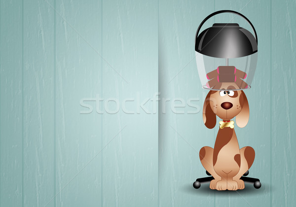 Dog with hairdresser helmet for grooming Stock photo © sognolucido