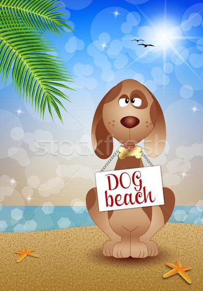 Köpek plaj örnek güneş köpekler hayvanlar Stok fotoğraf © sognolucido