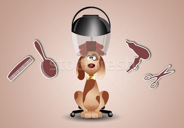 собака мало парикмахер собаки животные пузырьки Сток-фото © sognolucido