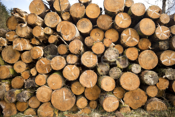 Tree Logs Stacked Stock photo © solarseven