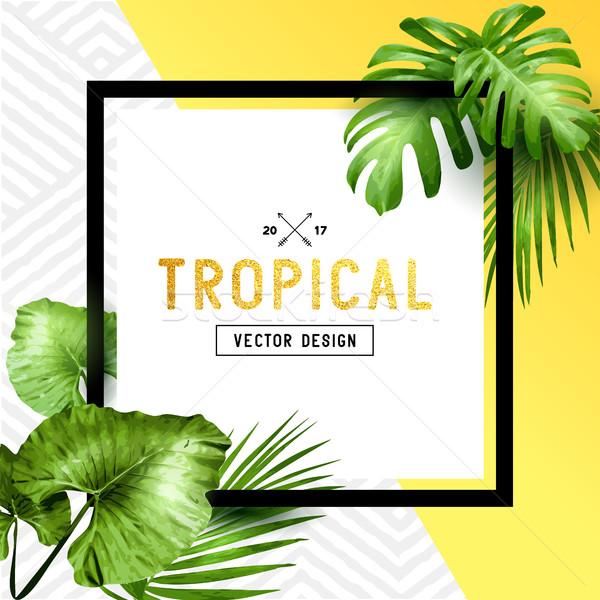 Stok fotoğraf: Egzotik · tropikal · yaz · çerçeve · palmiye · yaprağı · çiçekler