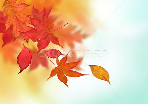 Stock photo: Colourful Autumn Falls