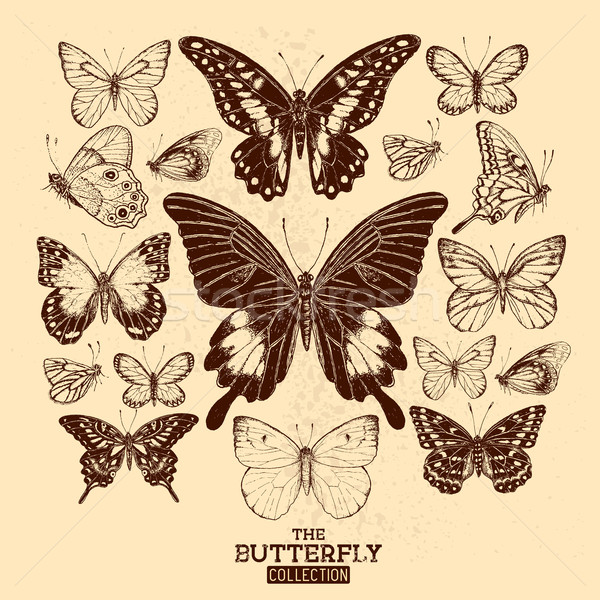 Farfalla raccolta farfalle vintage set Foto d'archivio © solarseven