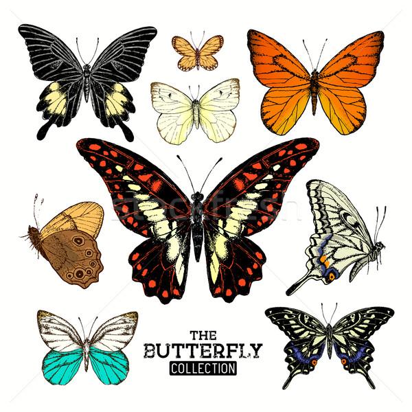 Realista borboleta coleção conjunto borboletas mão Foto stock © solarseven