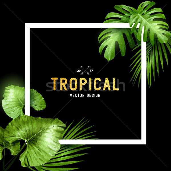 Egzotik tropikal yaz çerçeve palmiye yaprağı çiçekler Stok fotoğraf © solarseven