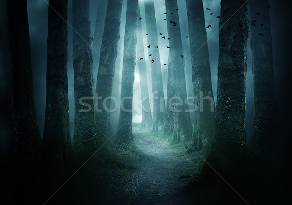 Pathway Through A Dark Forest Stock photo © solarseven