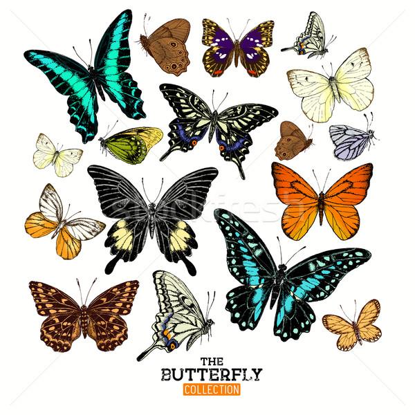 Realistico farfalla raccolta set farfalle mano Foto d'archivio © solarseven