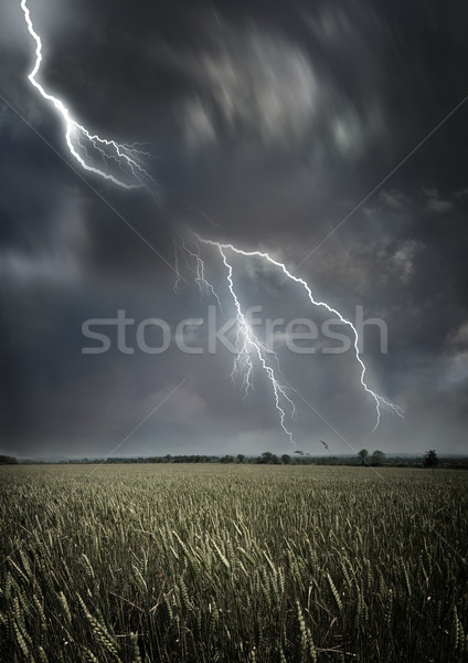 Stormy Weather Stock photo © solarseven
