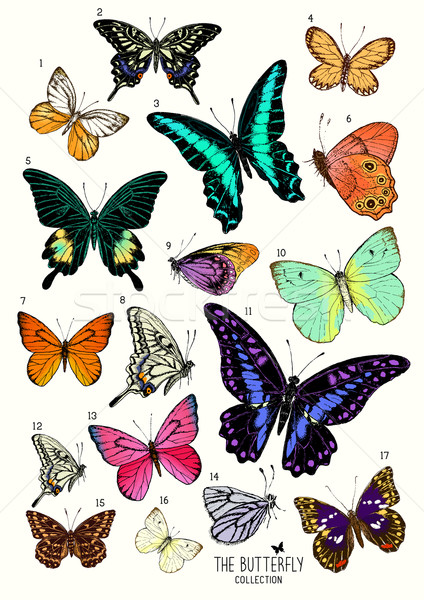 Grande coleção borboletas conjunto casamento Foto stock © solarseven