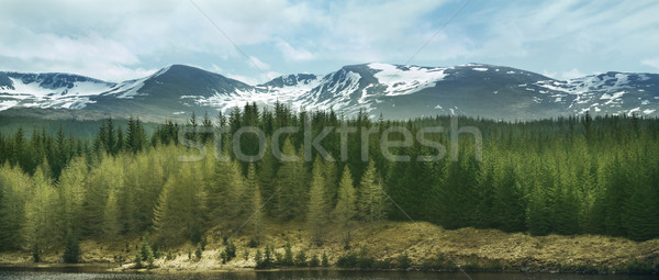 Highland Mountains and Forests Stock photo © solarseven