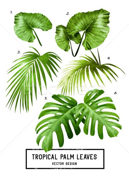 Tropikal vektör palmiye yaprağı ayarlamak yalıtılmış orman Stok fotoğraf © solarseven