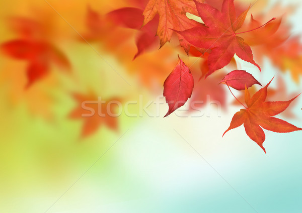 Belle automne relevant laisse arbre nature Photo stock © solarseven