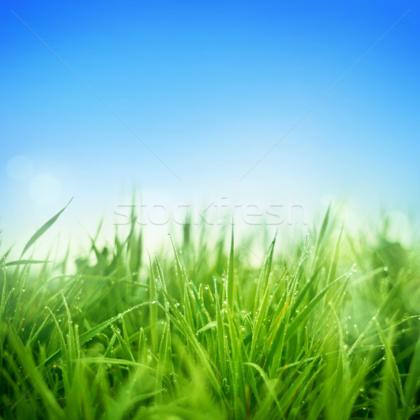 Fresh Grass Stock photo © solarseven