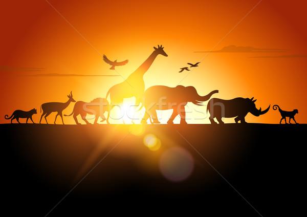 Sunset Safari Stock photo © solarseven