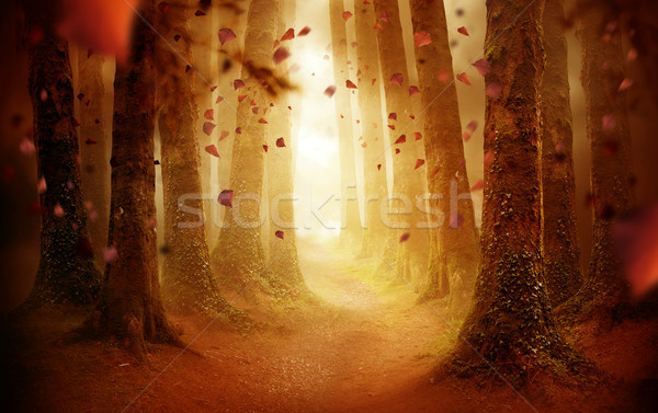 Pathway Through An Autumn Forest Stock photo © solarseven