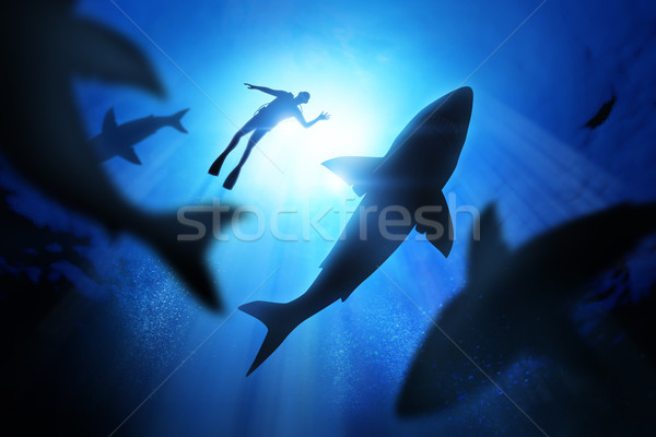 Diver And Great White Sharks Stock photo © solarseven