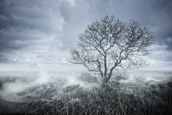 Beautiful Bleakness Stock photo © solarseven