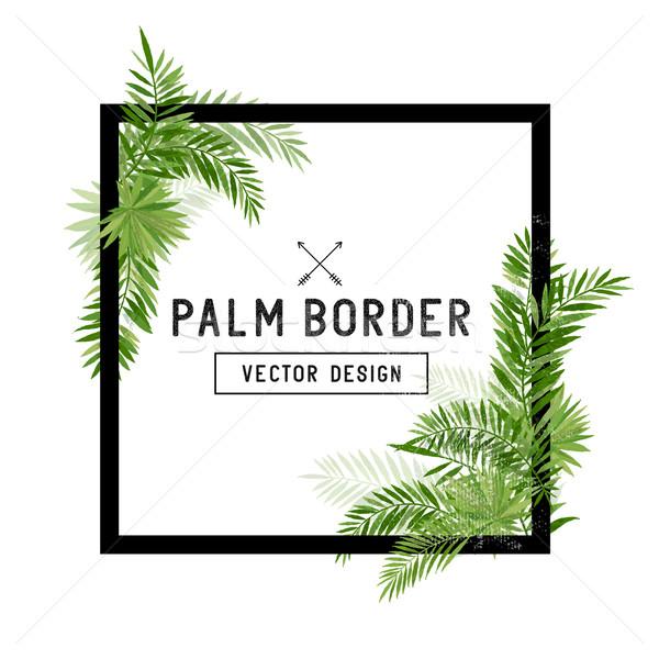 Tropikal palmiye yaprağı sınır vektör yaz hurma ağacı Stok fotoğraf © solarseven