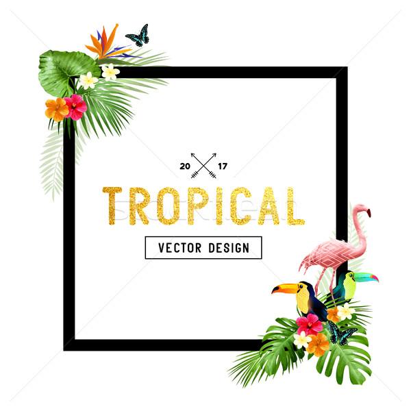 Stok fotoğraf: Tropikal · sınır · dizayn · renkli · canlı · çiçekler
