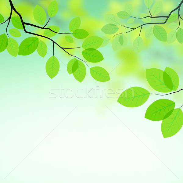 Stock photo: fresh leaves Background