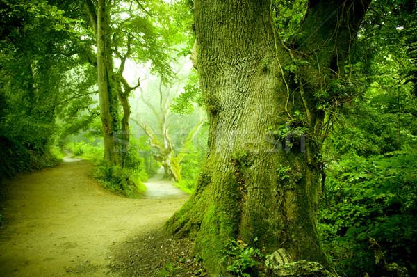 лес путь ведущий трава природы деревья Сток-фото © solarseven